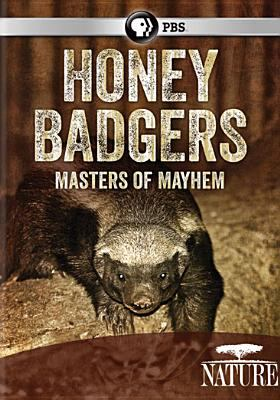 Honey badgers : masters of mayhem