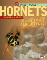Hornets : incredible insect architects